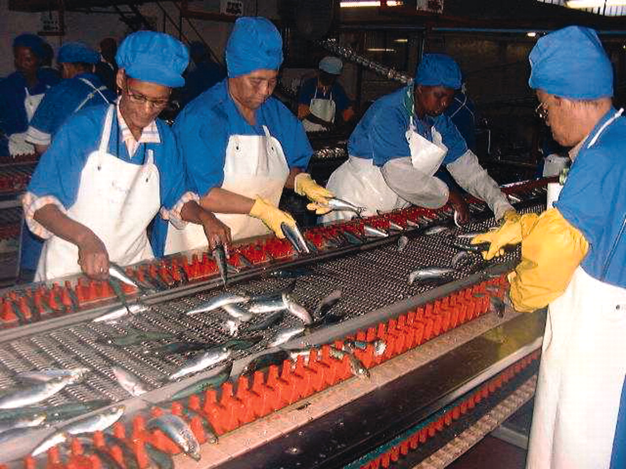 world at work fish processing workers jeebhay et al